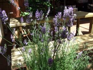 中庭に咲く紫の花