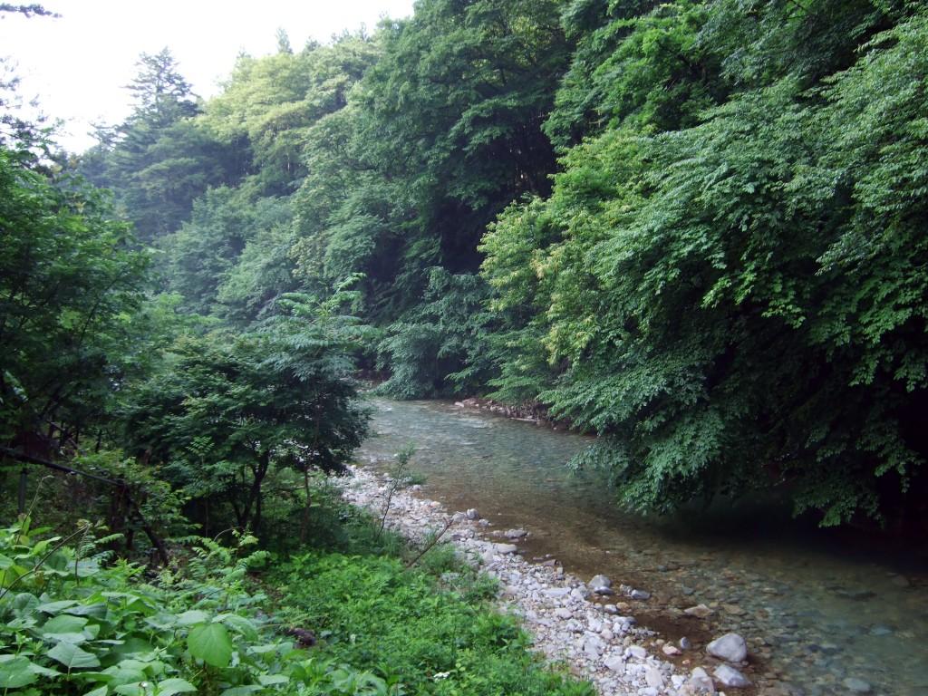 朝、渓流を眺めるだけでも目が覚めるほどです。