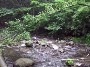 浅間大滝方向の道は比較的歩きやすくて渓流の眺めも良い感じです。