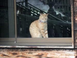 湯畑のそばにある某食事処にいた看板猫ちゃん。