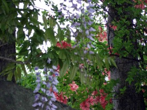 途中でキレイに咲いている花を沢山見つける事ができました。