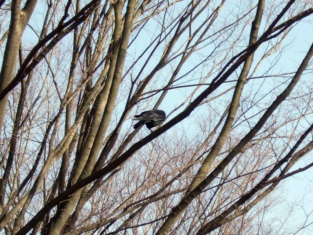 ある木に鳥が。
