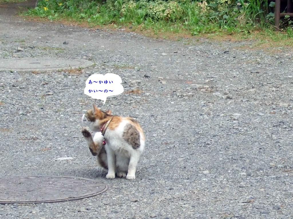 猫かい~の