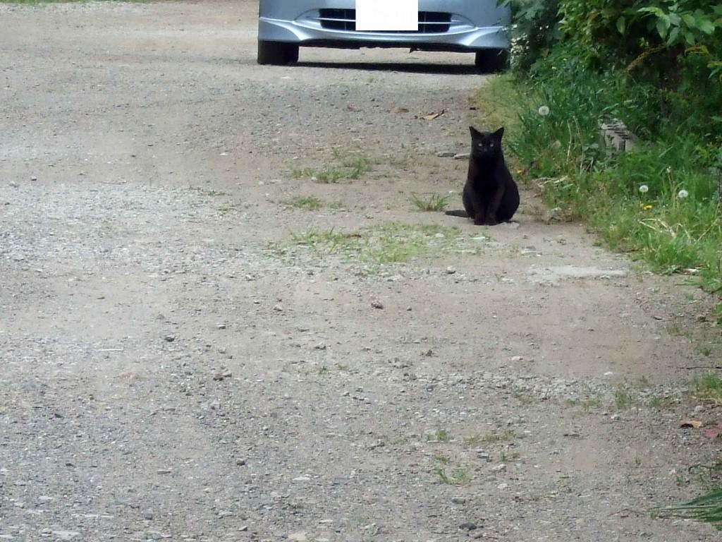 上記のツツジを観た先には、黒い猫に遭遇。この猫は人なれしているせいか落ちついています。