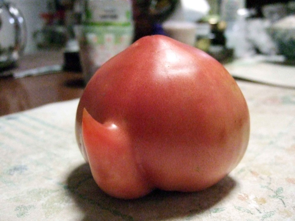 これはまさに急須トマトと名づけましょう!