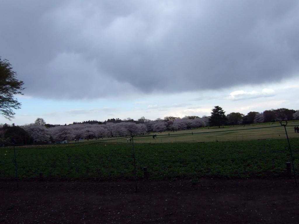 ここは先ほどの原っぱですが、黒い雲の先には青空が見えました。
