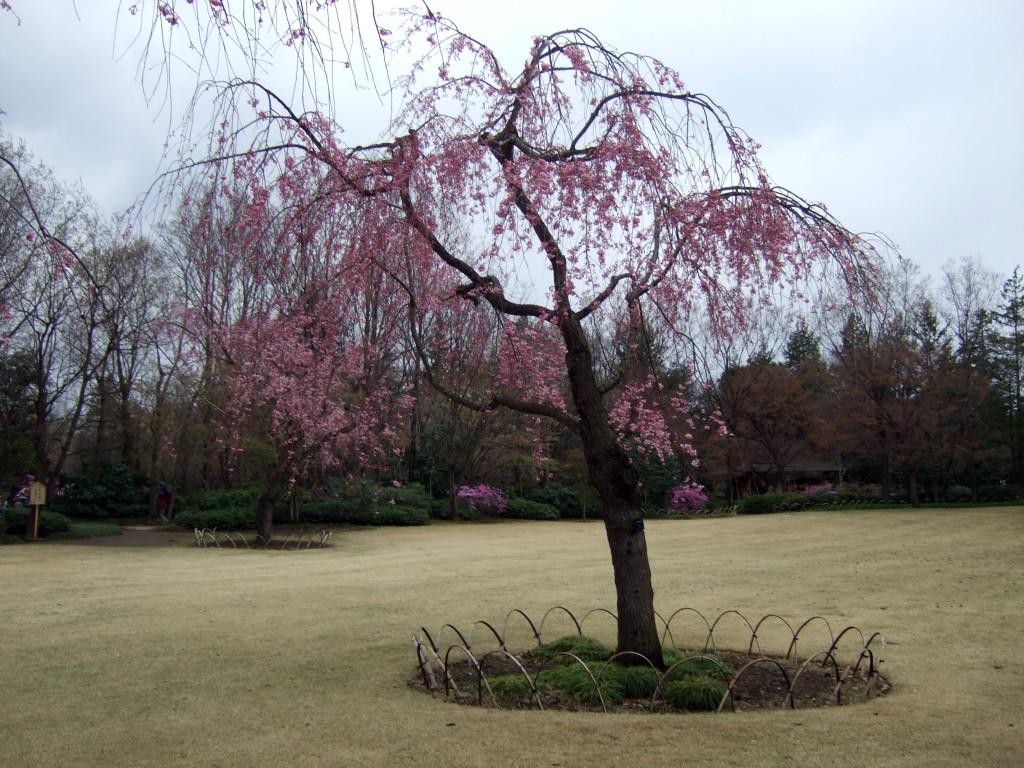 日本庭園13
