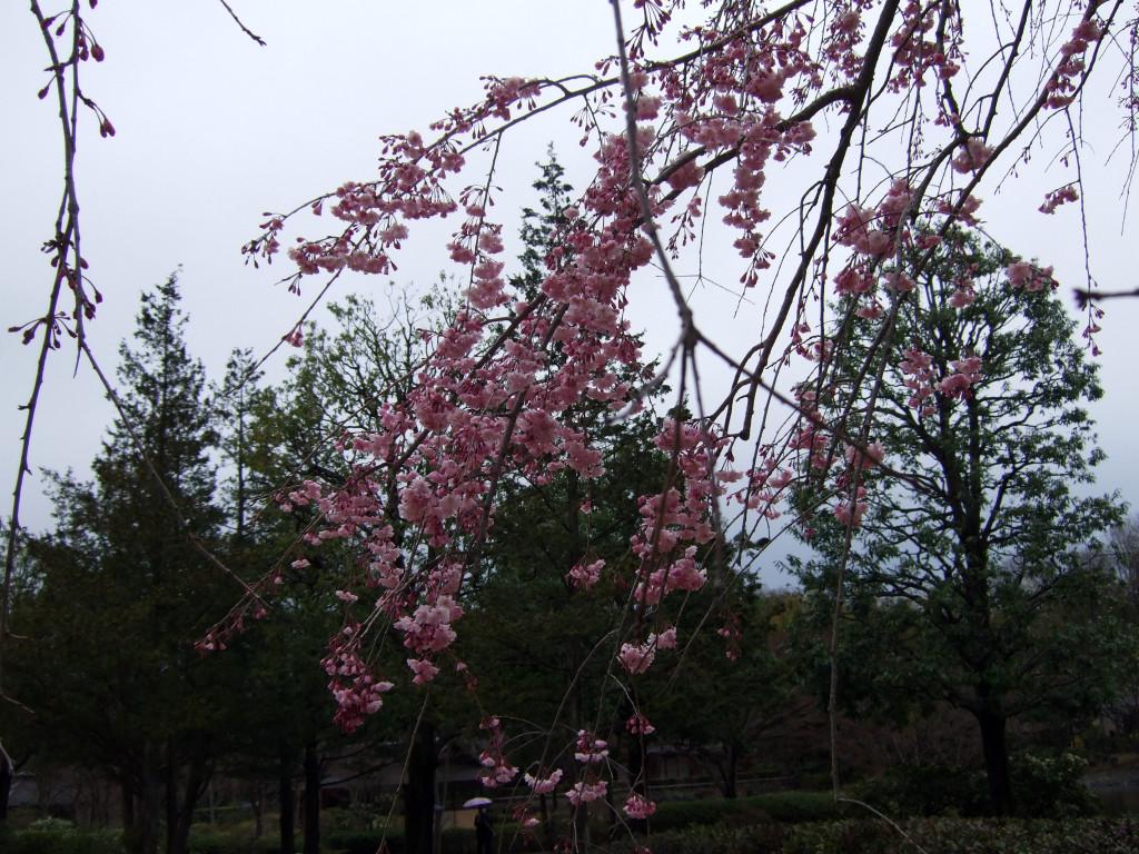 日本庭園14