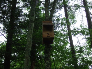 高い木の上に、各野鳥の巣箱があります。