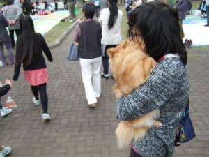 サンバの賑やか楽器で驚き、飼い主にしがみつく犬。