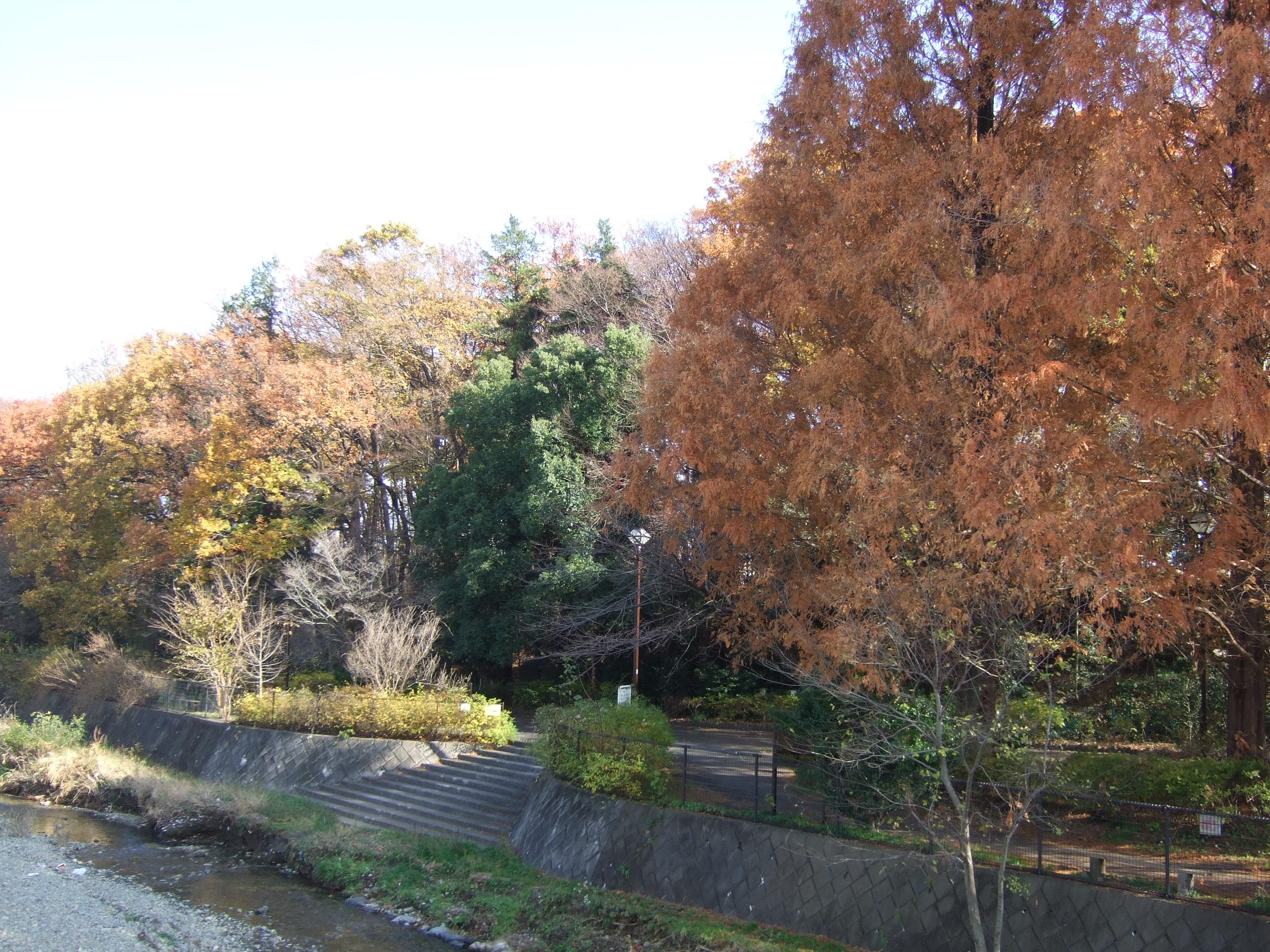 12月中旬とは思えない、遅れた秋の紅葉って感じかな?