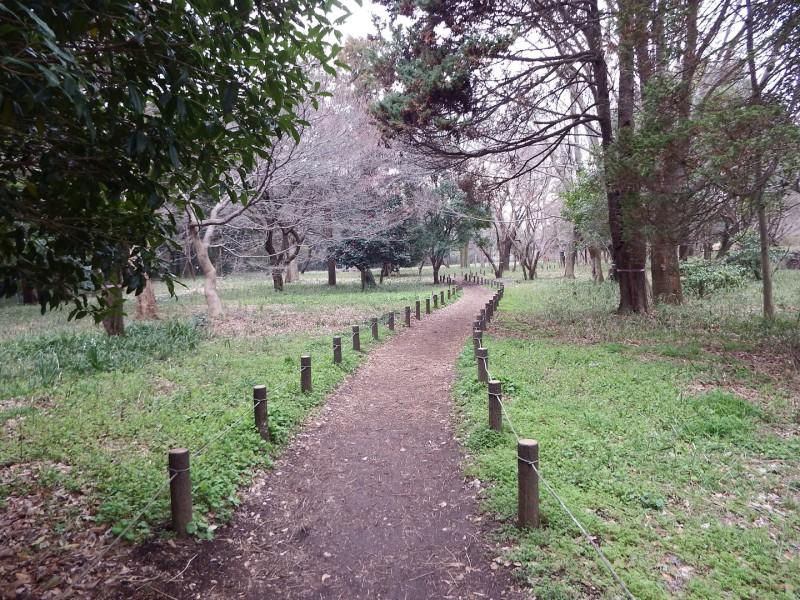 こちらは雑木林です。きちんと自然を保護されているので、道以外の草に足を踏み入れることは禁止されています。