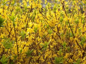 パッとさせる別の黄色い花