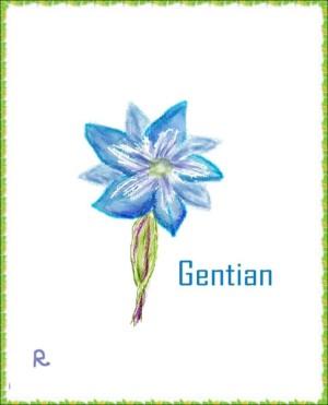 ハルリンドウ(春竜胆 Gentiana thunbergii) 花言葉:『高貴』『清潔な人』『真実の愛』