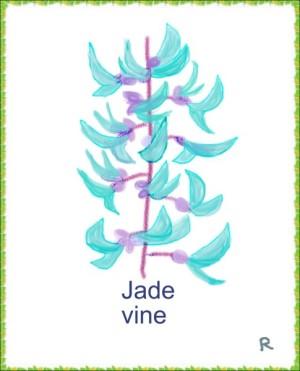ヒスイカズラ(翡翠葛)(英語:Jade Vine) 。フィリピン諸島に自生するマメ科の蔓植物。絶滅の危機があるほど大変貴重な花といわれている。花言葉:『私を忘れないで』