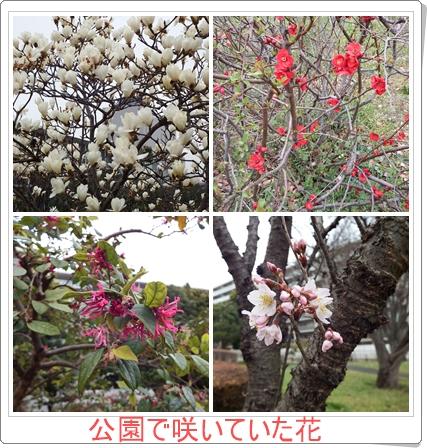 では花が咲いていました。左上は満開の白いモクレン、隣りの右上は真っ赤な梅、左下の赤い花の名は不明、そしてピンクの東海桜です。