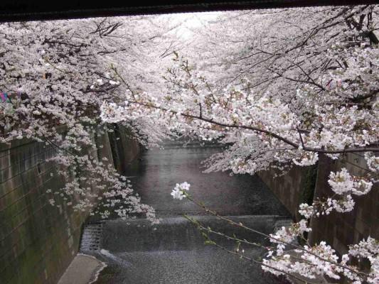 東急東横線の橋の下辺りを通過