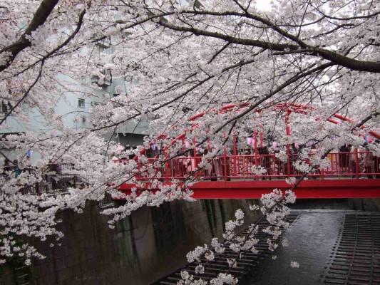 中目黒付近の赤い橋(中の橋)