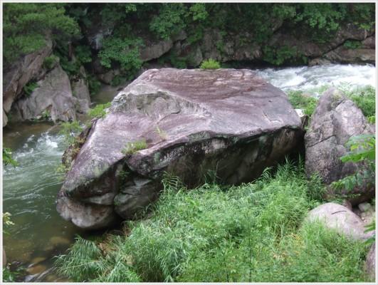 渓流には沢山の大きな岩があり、その中で特徴のある岩には名前が付けらています。この岩は「亀石」だそうです。何となく甲羅から顔を出しているカメのように見えます。