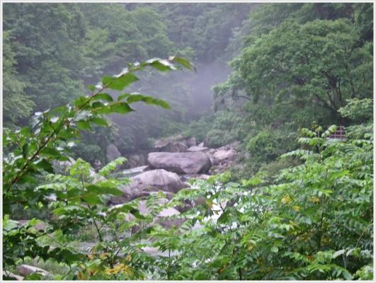 霧がかかった渓流も芸術です。