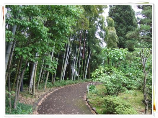 庭園内の竹林