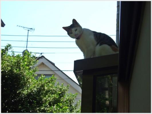 宣教師ご一家にはもう一人の家族として猫ちゃんがいます。今、屋根に上ったところ。