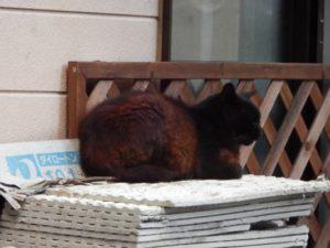 黒っぽい猫が民家の置物の上でのんびりとくつろぐ