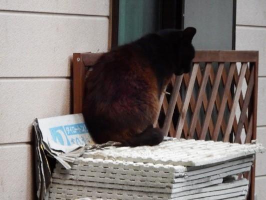 某民家の物置にいた黒猫