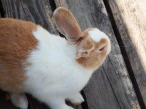 耳がまっすぐとピン立つウサギ