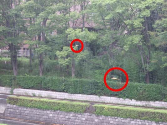 橋の反対側を見ると、強い雨脚がはっきりです。そこに何と数匹の赤とんぼが飛んでいました。赤丸がそうです。