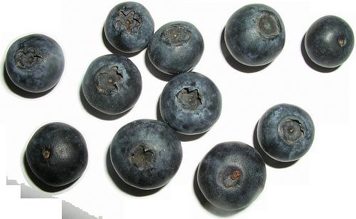 bilberry photo