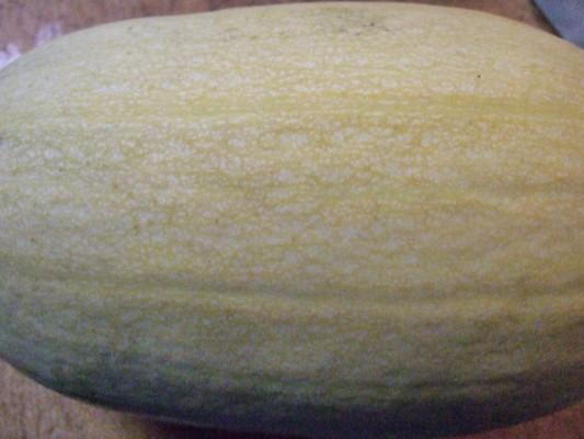 これが金糸瓜です!楕円形の南瓜と言った感じです。