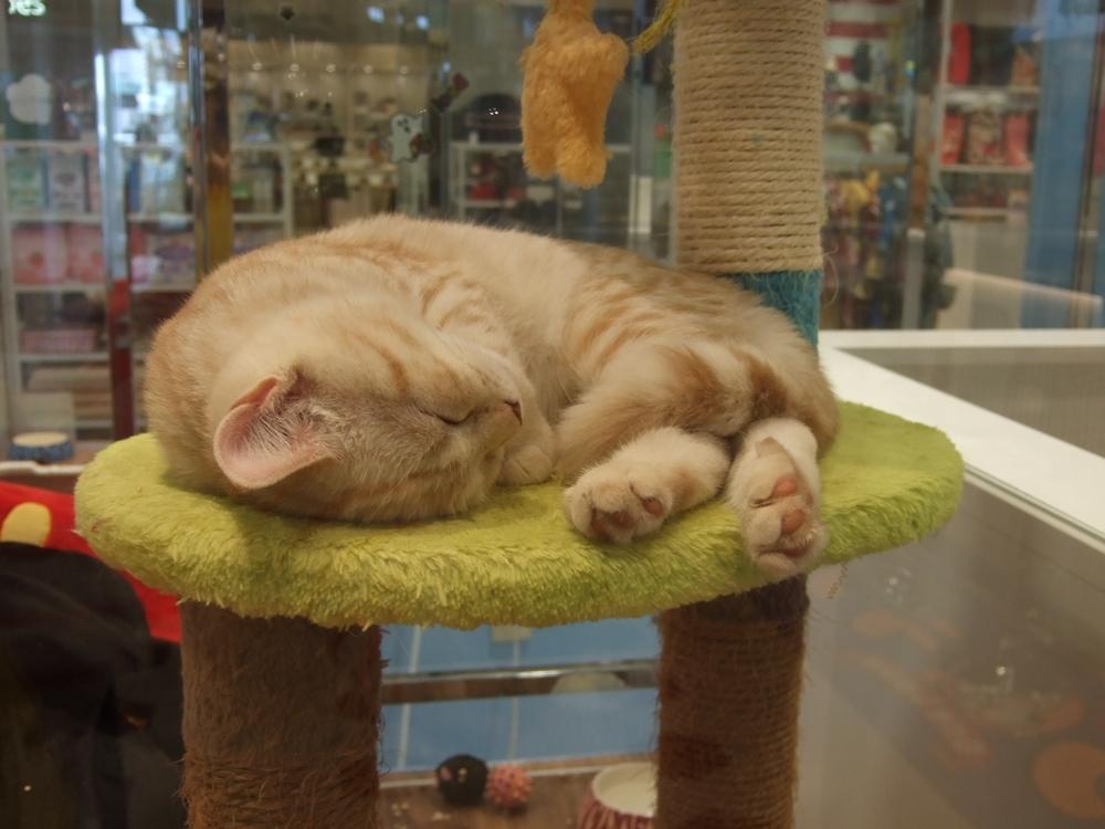 もう一匹の子猫もぐっすり。基本的に猫は寝てばっかり。