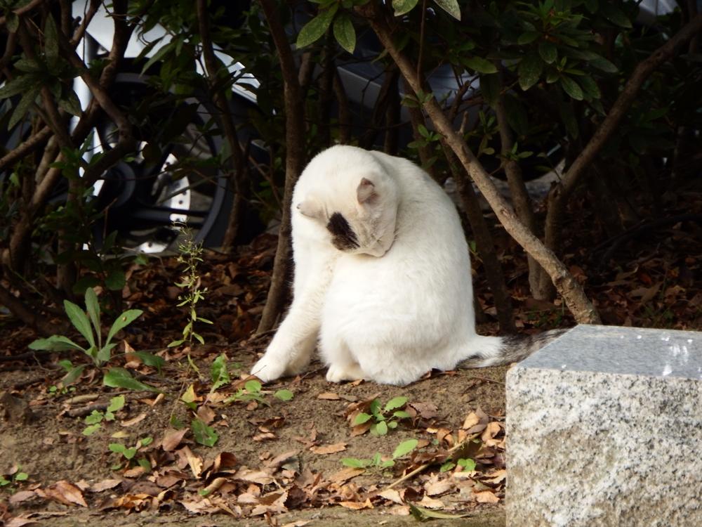 金山公園で見つけた猫