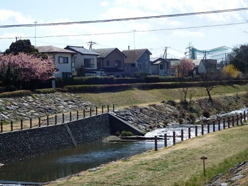 柳瀬川(小金井街道方面)
