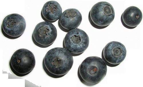 bilberry photo