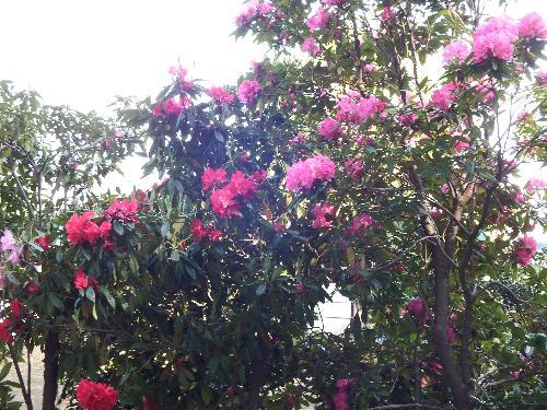農家の鮮やかでキレイな花