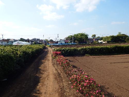 とても東京とは思えない農道の景色。