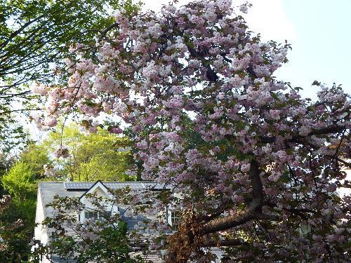 氷川神社の花