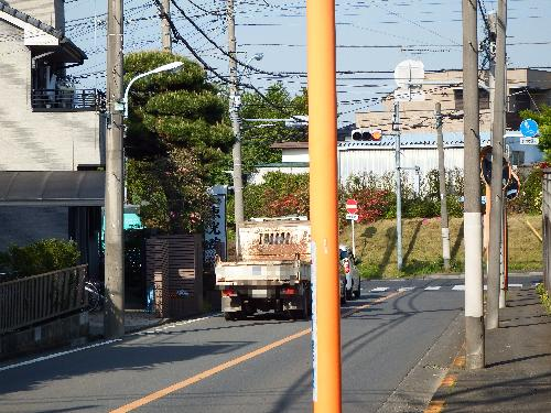小金井街道沿い