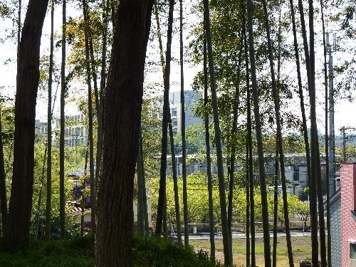雑木林の丘より明治薬科大学キャンパスが見えました。