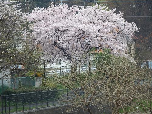 空堀川 梅坂橋付近(薬師橋方面)