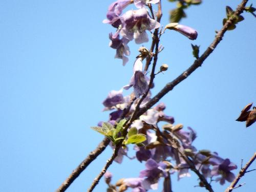 高い樹木の花