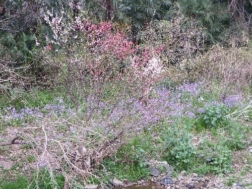 柳瀬川の岸に咲く花