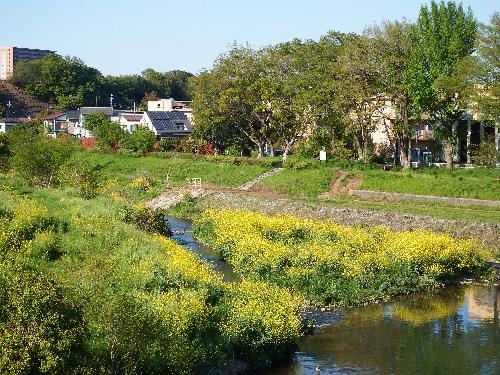 柳瀬川(金山公園方面)
