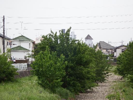 曙橋(中央)から上流側の景色