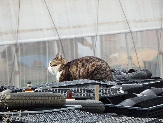 横向き姿の猫
