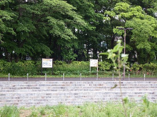 東村山市内 雑木林広場