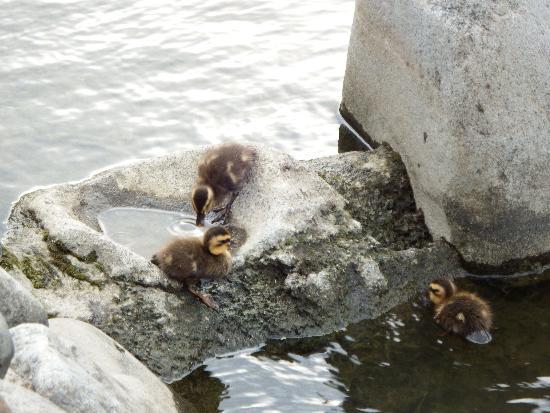 上手く岩に登った2羽の雛