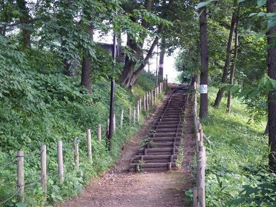 清瀬中里緑地保全地域の階段道(入口付近より撮影)
